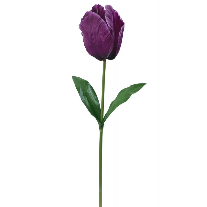 Tulipe géante