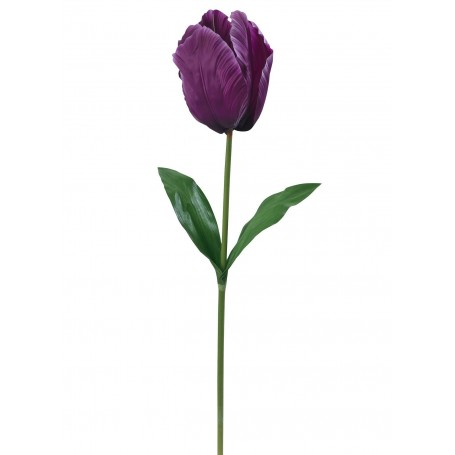 Tulipe géante XXL