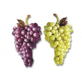 Grappe de raisin géante
