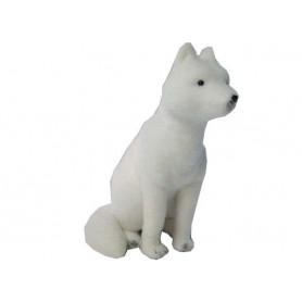 Loup polaire